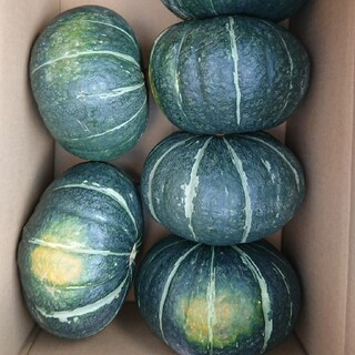 北海道産 無農薬 かぼちゃ 6個