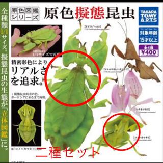 原色擬態昆虫 二種セット