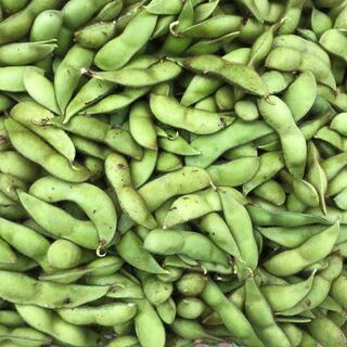 訳あり‼️無農薬栽培丹波黒豆の枝豆4キロ(野菜)
