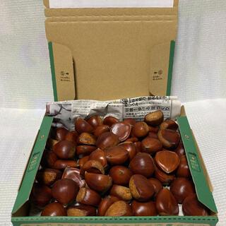 ポロタン c  1.3kg 貯蔵栗(収穫9月中旬で写真2〜3枚目の状態で保冷中)