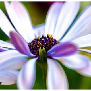 DOLCE&GABBANA - 超美品✨ドルチェ&ガッバーナ 天使とお花のトップス