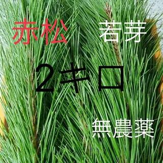 松葉 赤松 若芽 無農薬、松の葉 松葉茶などにどうぞ(野菜)