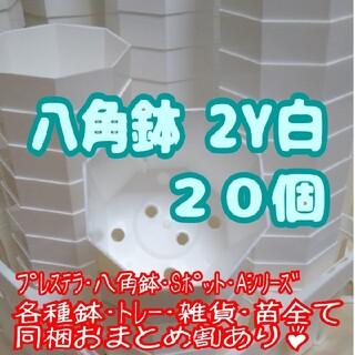プラ八角鉢 カネヤ【2Y】20個 多肉植物 プレステラ(プランター)