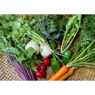 【綾善farm】農薬不使用のお野菜セット お試し8品60サイズ
