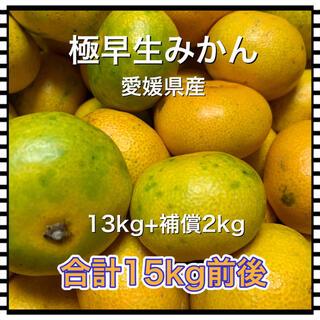 10181 極早生みかん 13kg+補償2kg 訳あり 愛媛県産 蜜柑
