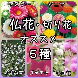 【花の種】仏花 切り花 5種 150粒(その他)