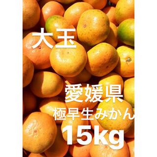 rebone様 専用 愛媛県産 極早生みかん 柑橘 15kg(フルーツ)