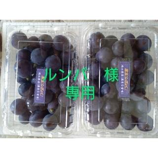 ルンバ様専用 ブドウ、紫玉、4.8kg 加工用(フルーツ)