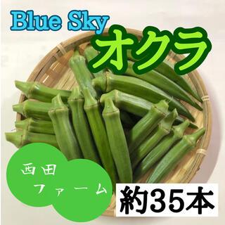 熊本県八代産 新鮮おくら(ブルースカイ) 35本(野菜)