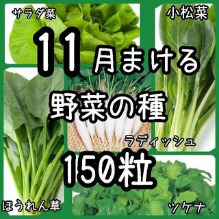 【野菜の種】11月まき 5種 種子 150粒(その他)