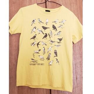 Graniph - graniph アートシャツ 野鳥