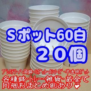 【スリット鉢】Sポット丸型60白20個 2号6cm プレステラ 多肉植物プラ鉢(プランター)