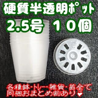硬質半透明ポリポット 2.5号 7.5cm 10個 プラ鉢 多肉植物 プレステラ(プランター)