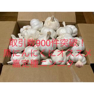 嘉定種 令和3年度産ニンニク 中球(M球程度) 5kg にんにく(野菜)