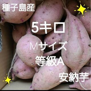 種子島産安納芋Mサイズ5キロ