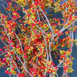 ツルウメモドキの実 ドライフラワー プリザーブドフラワー花材(ドライフラワー)