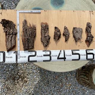 樹皮 セット ビカクシダ コウモリラン リドレイ 着生 爬虫類 虫  テラリウム(その他)