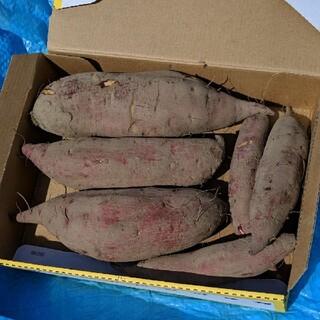 サツマイモ シルクスイート