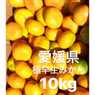 愛媛県産 極早生みかん 柑橘 10kg(フルーツ)