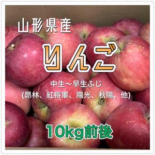 10192 山形県産 りんご 10kg前後 訳あり 品種おまかせ
