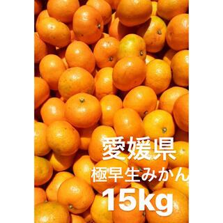 愛媛県 極早生みかん 柑橘 15kg(フルーツ)