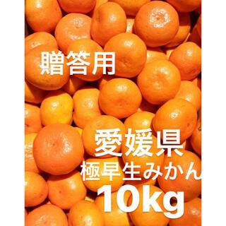 愛媛県産 贈答用 極早生みかん 柑橘 10kg(フルーツ)
