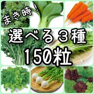 【野菜の種】3種 150粒 種子(その他)