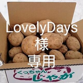 北海道産 じゃが芋 (野菜)