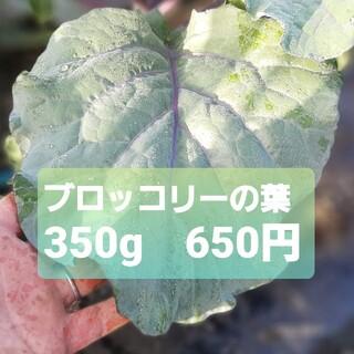 【無農薬】ブロッコリーの葉っぱ 350g フレッシュ(野菜)