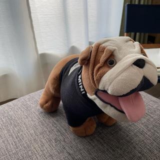 BMW - ミニクーパー 犬 非売品 スパイク君