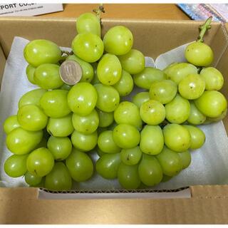 福岡県産 シャインマスカット 約1.4キロ