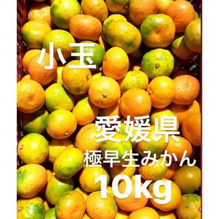 愛媛県 極早生みかん 柑橘 10kg(フルーツ)