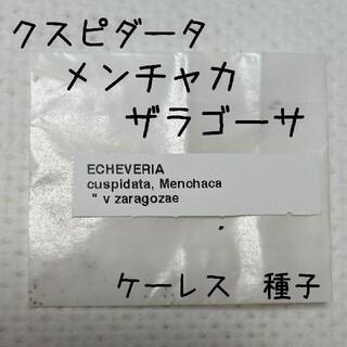 黒爪ザラゴーサ ケーレス 種子 エケベリア(その他)