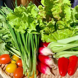 無農薬栽培野菜の詰め合わせ