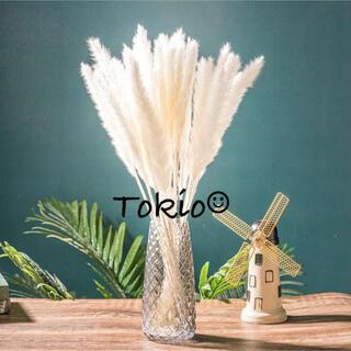 パンパスグラス テールリード ホワイト インテリア 10(ドライフラワー)