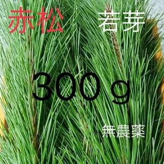 松葉 赤松 若芽 無農薬 松の葉、松葉茶などにどうぞ