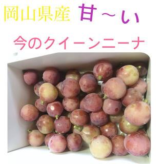 岡山県産  ぶどう クイーンニーナ  粒売り