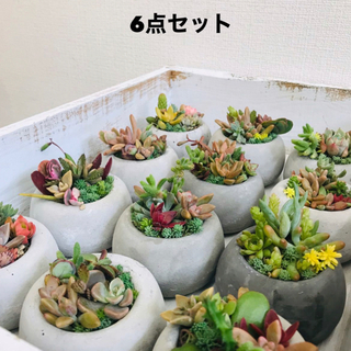 オシャレセメント鉢 6点セット 丸鉢(プランター)