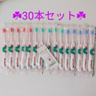 ☘歯科専売☘ はらぺこあおむし✖30本(歯ブラシ/歯みがき用品)