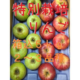 りんご2~3種食べ比べ!箱込5kg【特別栽培】