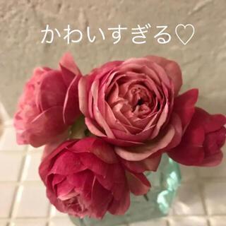 C(ᵔᴥᵔ)ミニバラ♡カルーセル♡コルダーナ♡可愛アンティークなお庭♡(その他)
