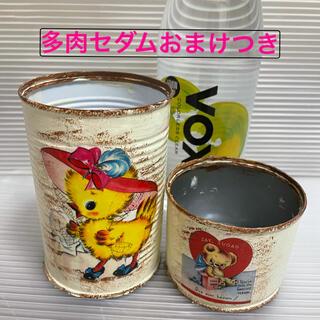リメイク缶 リメ缶2個セット 多肉セダムおまけつき(その他)