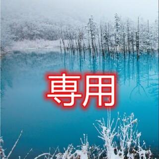 多肉植物 10211(その他)