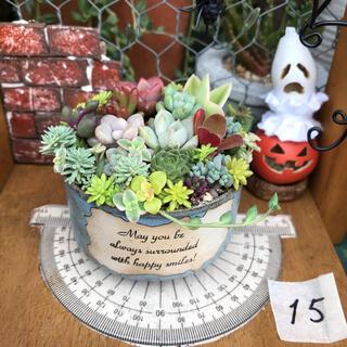 そのまま飾れる多肉植物の寄せ植え15 リメ缶 ハンドメイド(その他)