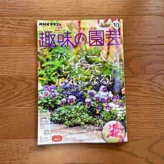 趣味の園芸 10月号 パンジー&ビオラで元気になる!(専門誌)