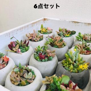 オシャレセメント植木鉢6点セット 植物は付きません(プランター)