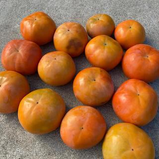 採れたて!富有柿☆約4.6kg岐阜県産
