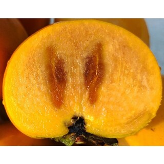 甘い甘柿❤️コンパクト満載1.4㌔程
