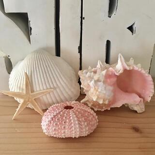 シーウーチン★巻貝などのインテリアセット