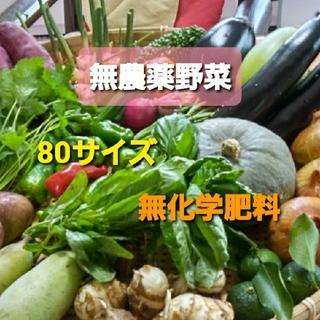 無農薬野菜セット 80サイズ